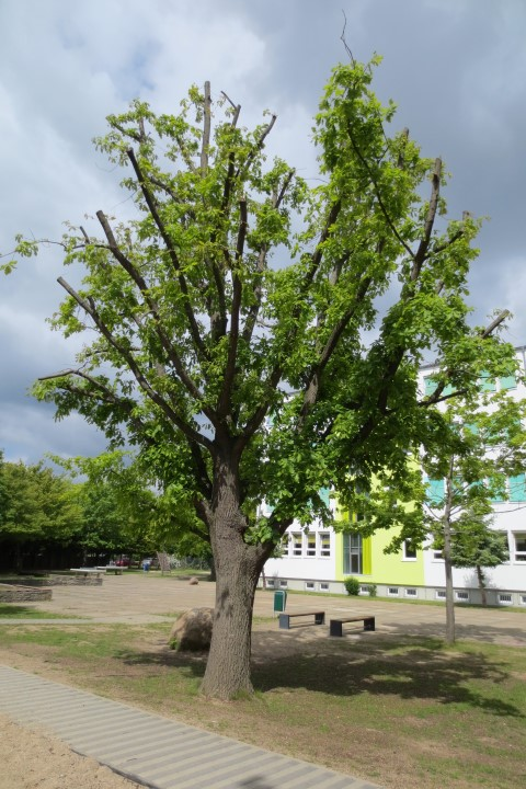 Comeniusschule Magdeburg